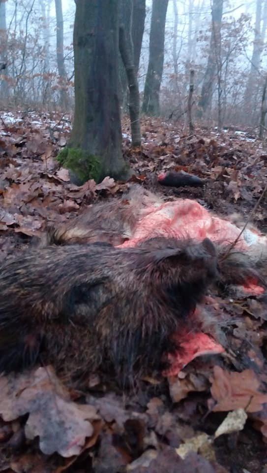 Жахливі знахідки: у лісопарку на Шахті жорстоко вбивають диких тварин? (ФОТО +18, ВІДЕО), фото-4