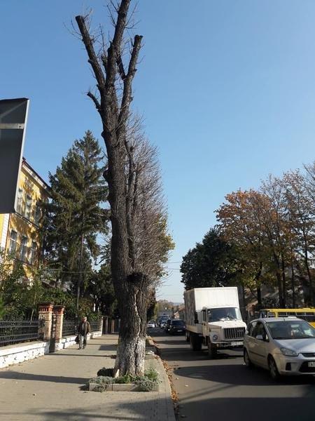"""В Ужгороді під знищення підпали дерева, які висохли після """"кронування"""" кілька років тому (ФОТО), фото-2"""