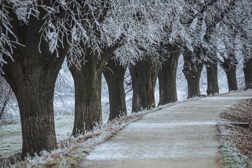 """Фото дня: як виглядає Ужгород у """"сріблі"""", фото-3"""