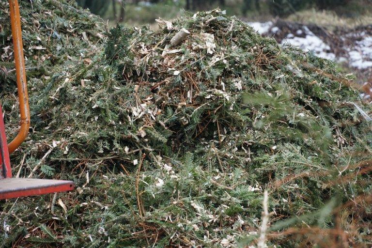 Ужгородські новорічні ялинки зі смітників стануть у нагоді: із них зроблять щепу (ФОТО), фото-3