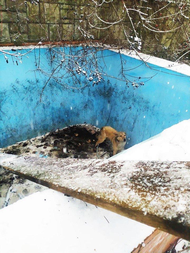 В Ужгороді собака два дні чекав на порятунок у двометровому басейні (ФОТО), фото-2