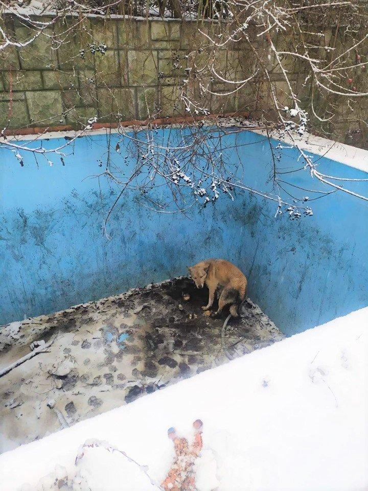 В Ужгороді собака два дні чекав на порятунок у двометровому басейні (ФОТО), фото-3