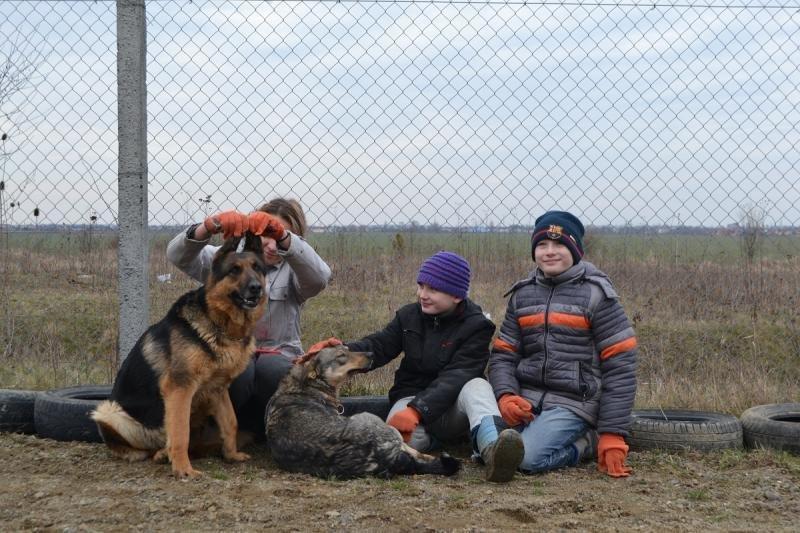 Кожен має другий шанс: на Ужгородщині з'явиться ще один притулок для тварин (ФОТО), фото-1