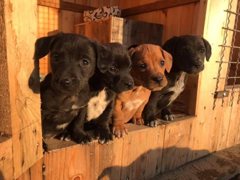 Кожен має другий шанс: на Ужгородщині з'явиться ще один притулок для тварин (ФОТО), фото-2