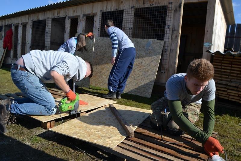Кожен має другий шанс: на Ужгородщині з'явиться ще один притулок для тварин (ФОТО), фото-6