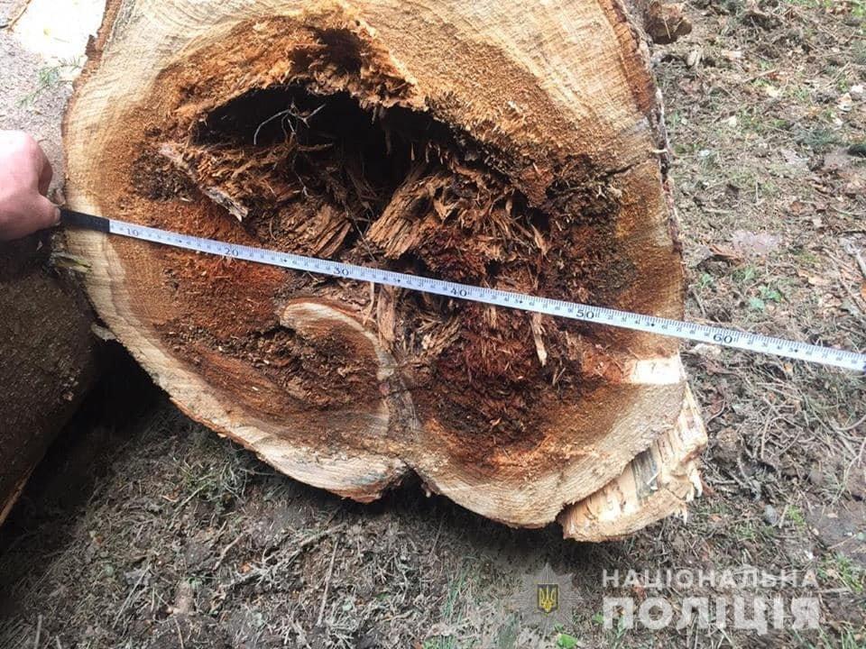 Вирубка лісу на Закарпатті: сотня селян заблокувала техніку лісорубів та викликала поліцію (ФОТО), фото-3