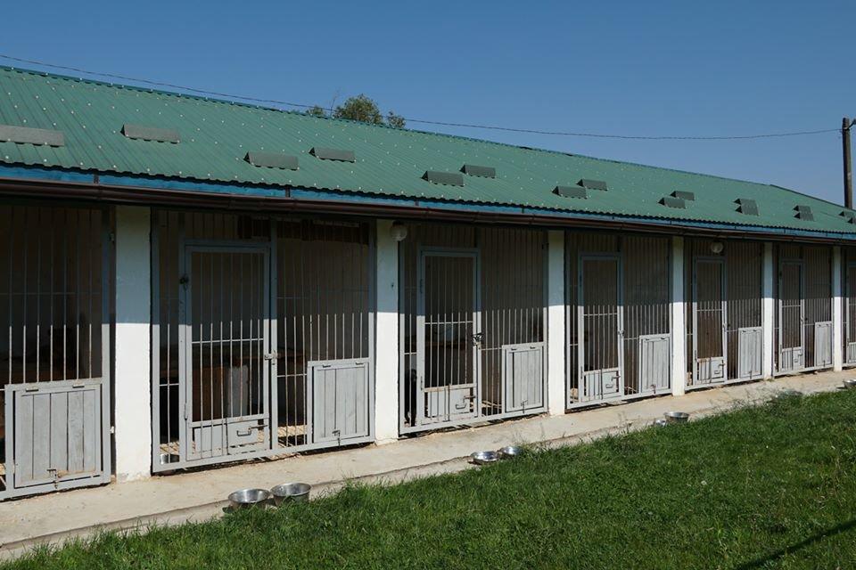 """Ужгородський притулок для тварин """"Барбос"""" отримає 1,5 млн грн: побудують нові вольєри (ФОТО), фото-5"""