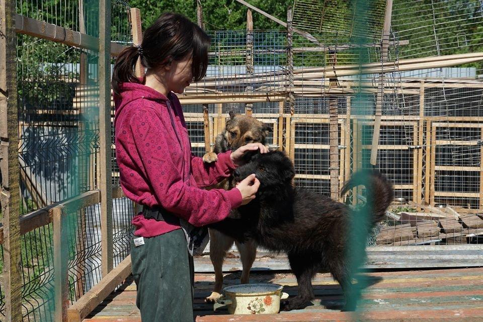 """Ужгородський притулок для тварин """"Барбос"""" отримає 1,5 млн грн: побудують нові вольєри (ФОТО), фото-4"""