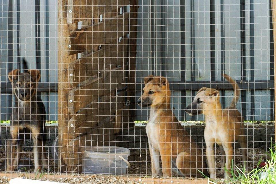 """Ужгородський притулок для тварин """"Барбос"""" отримає 1,5 млн грн: побудують нові вольєри (ФОТО), фото-1"""