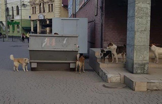 На Закарпатті зграя безпритульних собак напала на жінку (ФОТО), фото-1
