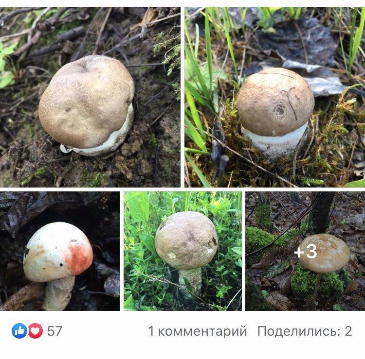 Великий врожай: на Закарпатті стартував грибний сезон (ФОТО), фото-2