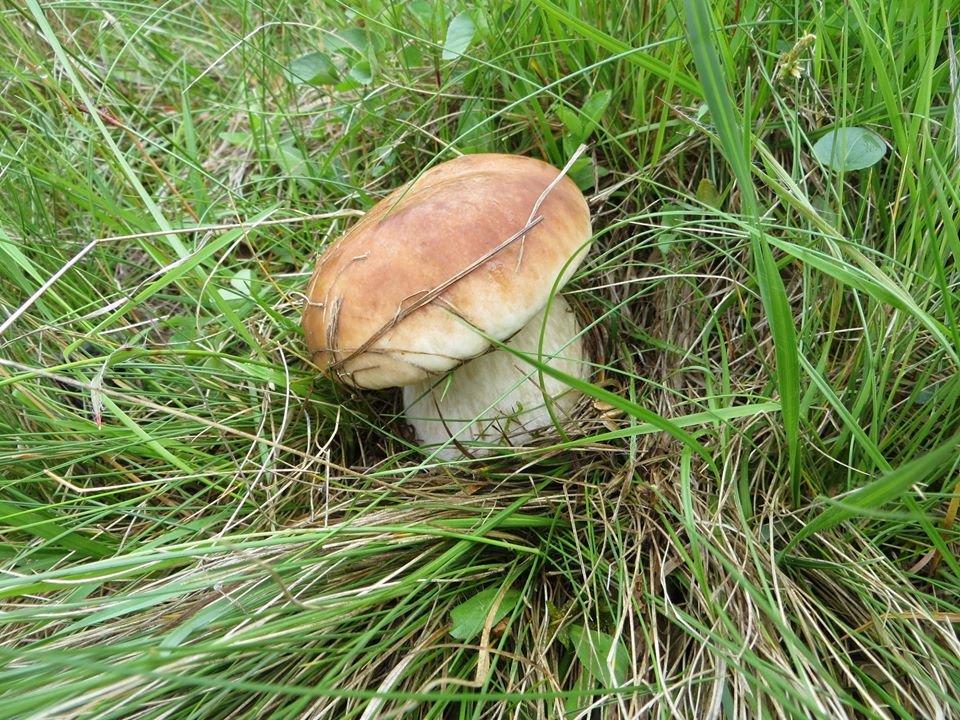 Великий врожай: на Закарпатті стартував грибний сезон (ФОТО), фото-3