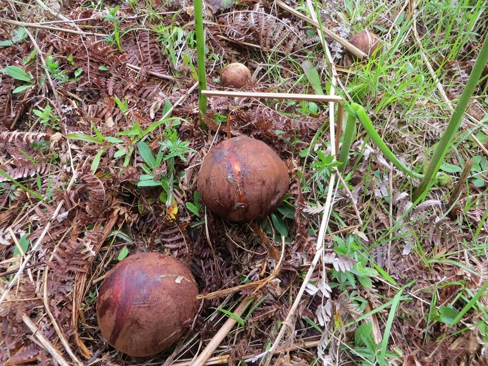 Великий врожай: на Закарпатті стартував грибний сезон (ФОТО), фото-4