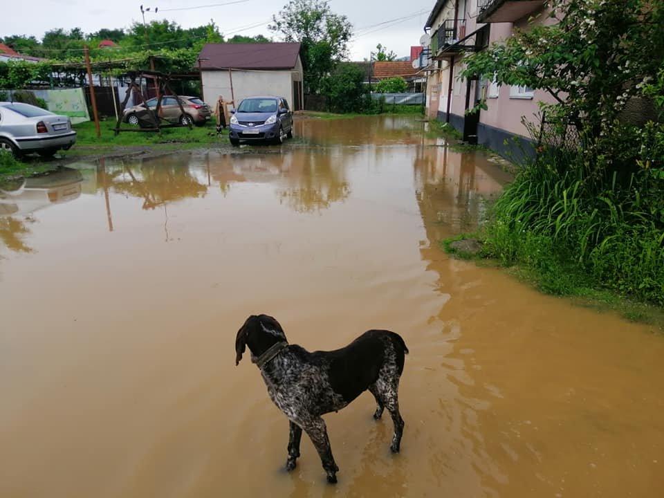 Підтоплені будинки та вулиці: ще одне місто Закарпаття постраждало від негоди (ФОТО), фото-1