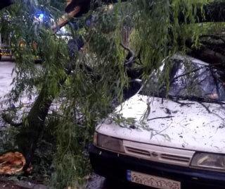 Пошкоджено автомобіль та будинок: на Закарпатті рятувальники ліквідовували наслідки падіння дерев, фото-1