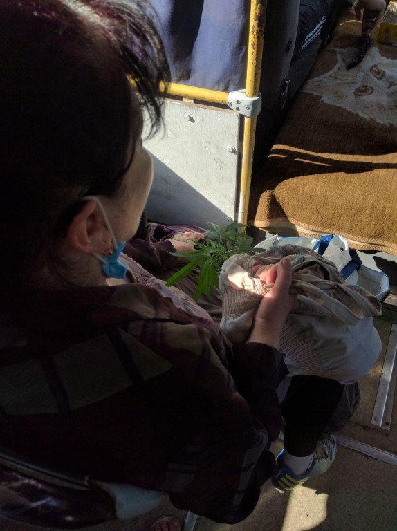 В Ужгороді затримали жінку, що перевозила наркотичну рослину в маршрутці, фото-1