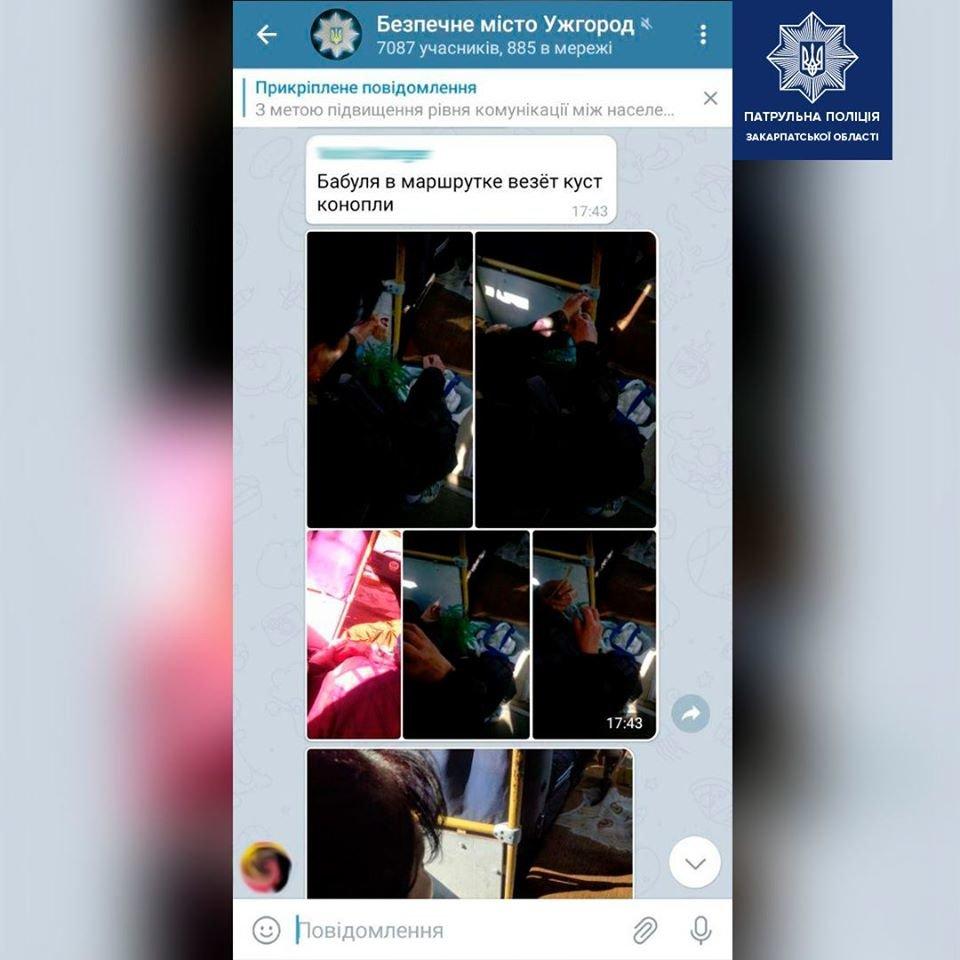 Ужгородка перевозила в маршрутці ймовірно наркотичну рослину: патрульні затримали жінку (ФОТО), фото-1