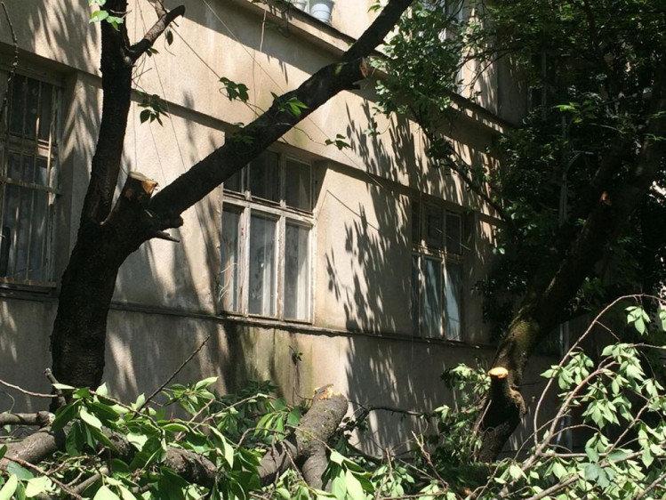 В історичній частині Ужгорода вирубали сакури, бо ремонтували дах будинку (ФОТО), фото-3