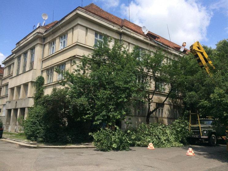В історичній частині Ужгорода вирубали сакури, бо ремонтували дах будинку (ФОТО), фото-1
