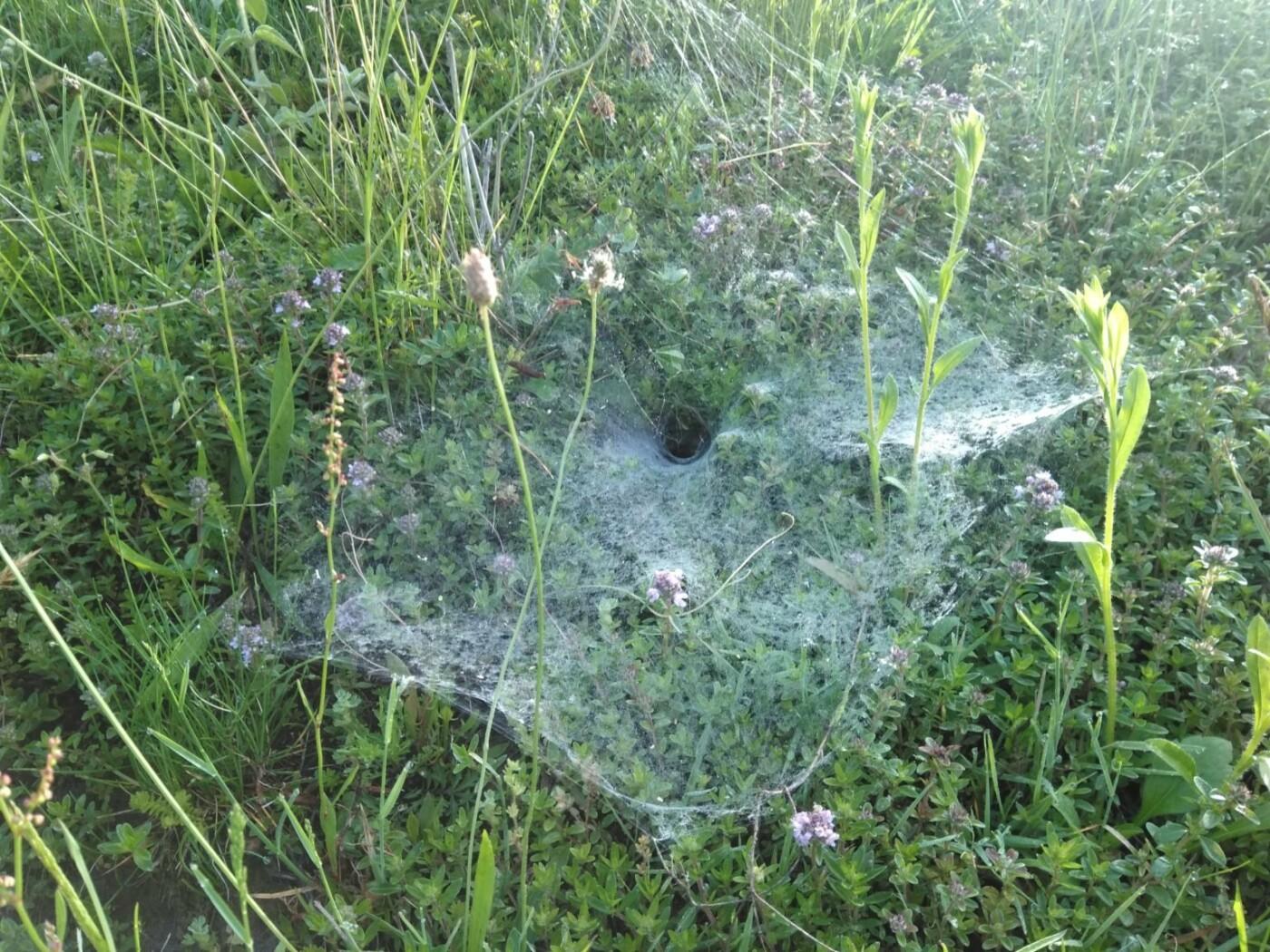 На Закарпатті павуки розставили метрові тенета на здобич (ФОТОФАКТ), фото-1