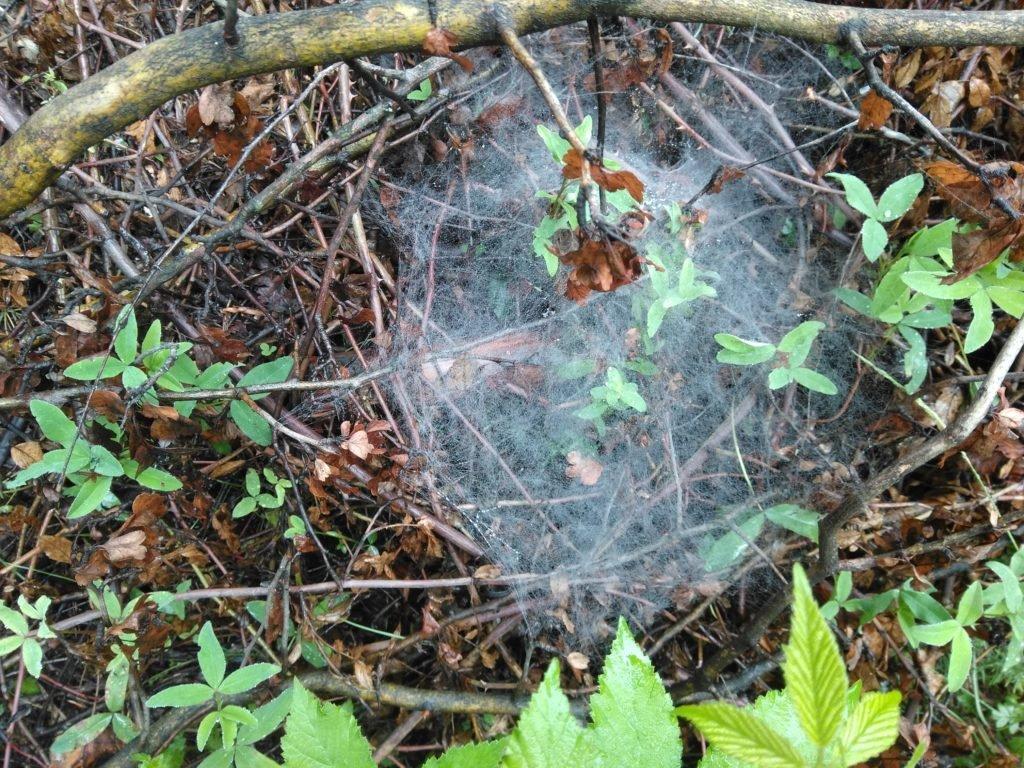 На Закарпатті павуки розставили метрові тенета на здобич (ФОТОФАКТ), фото-2