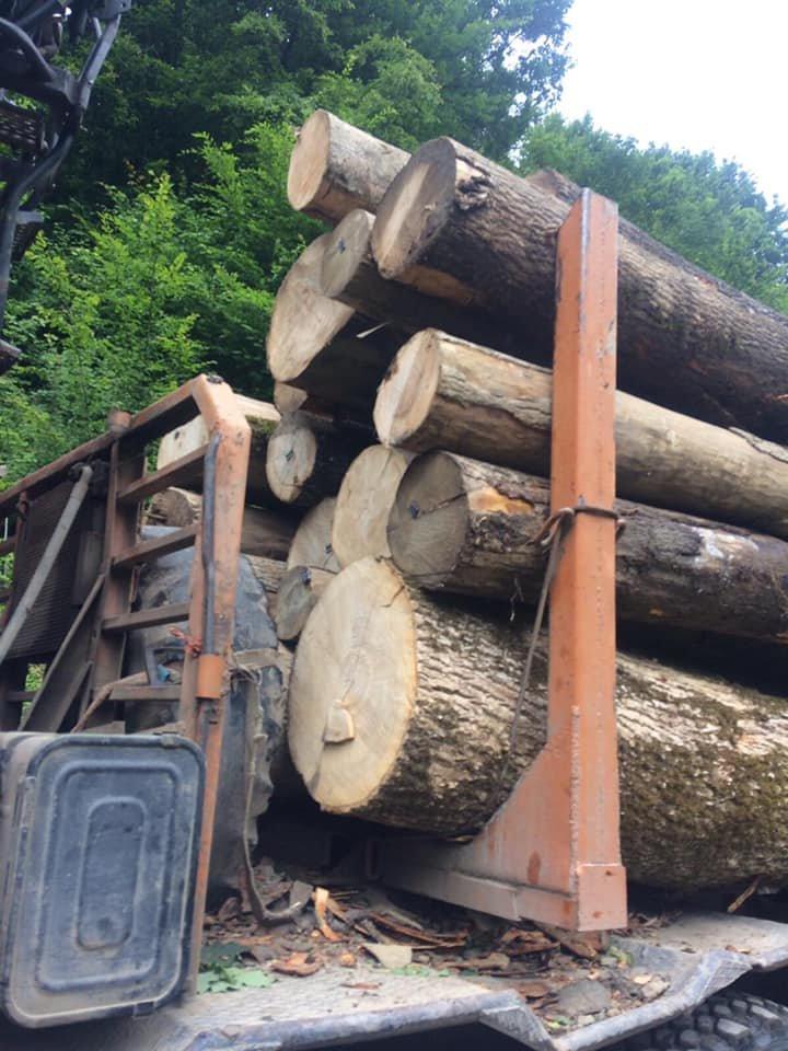 На Закарпатті затримали вантажівку з деревиною: перевозили ліс на підставі підроблених документів, фото-1