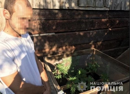 На Мукачівщині у дворогосподарстві 25-річного чоловіка знайшли саджанці коноплі, фото-1
