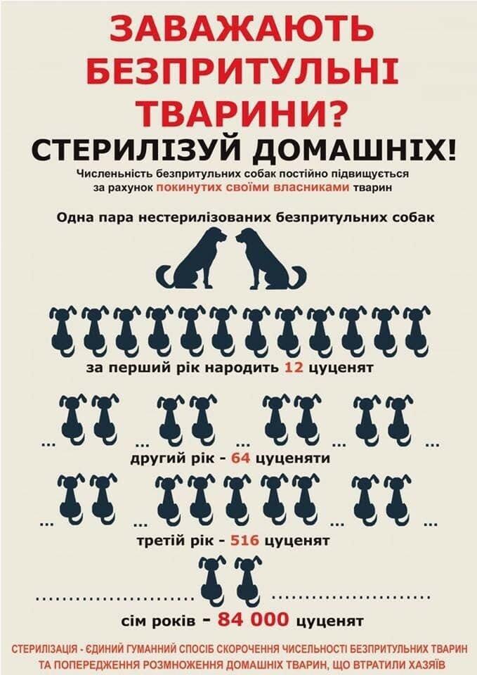 Завдяки волонтерам в Ужгороді простерилізували 68 безпритульних тварин (ФОТО), фото-1