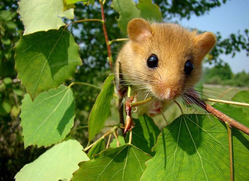 Чарівна природа Закарпаття: у горах зустріли рідкісну тваринку (ФОТО), фото-3