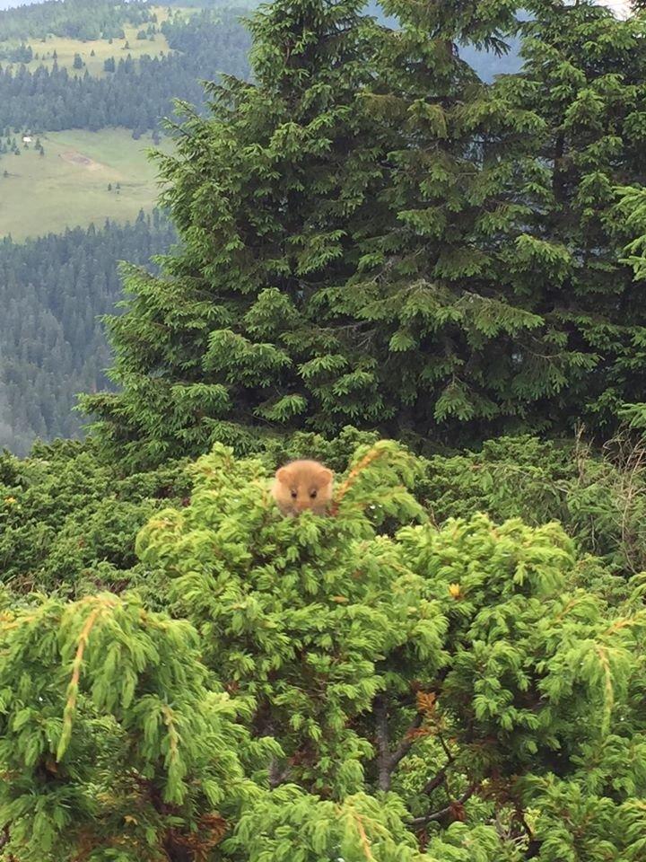 Чарівна природа Закарпаття: у горах зустріли рідкісну тваринку (ФОТО), фото-2