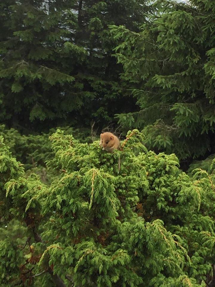 Чарівна природа Закарпаття: у горах зустріли рідкісну тваринку (ФОТО), фото-1