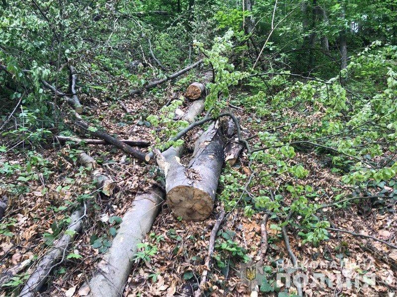 """Рубав дерева у заповіднику: на Закарпатті судитимуть """"чорного"""" лісоруба (ФОТО) , фото-1"""