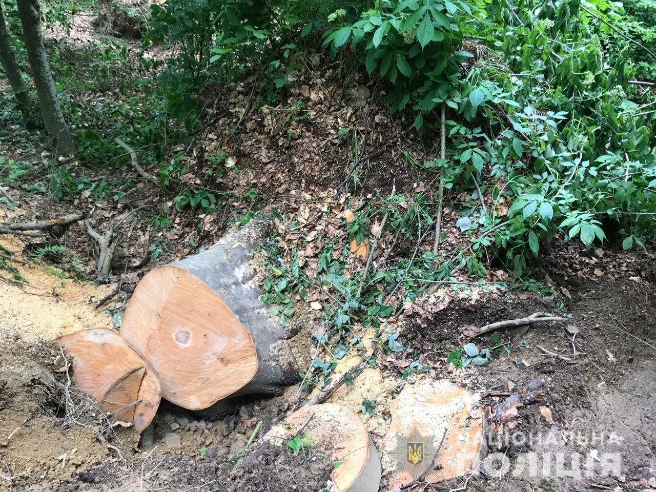 """Рубав дерева у заповіднику: на Закарпатті судитимуть """"чорного"""" лісоруба (ФОТО) , фото-2"""