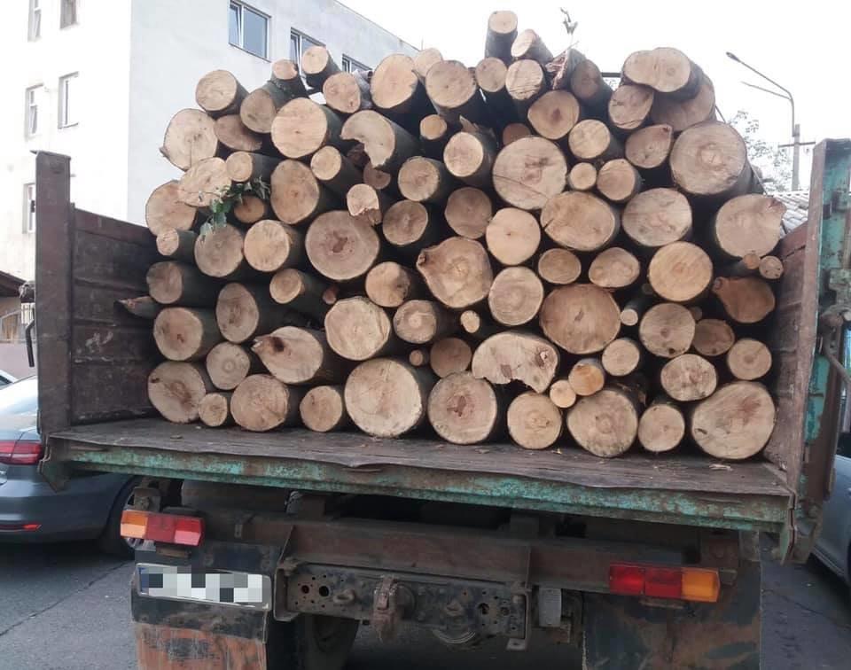 4 випадки за один день: на Закарпатті поліція активно бореться з чорними лісорубами (ФОТО), фото-4