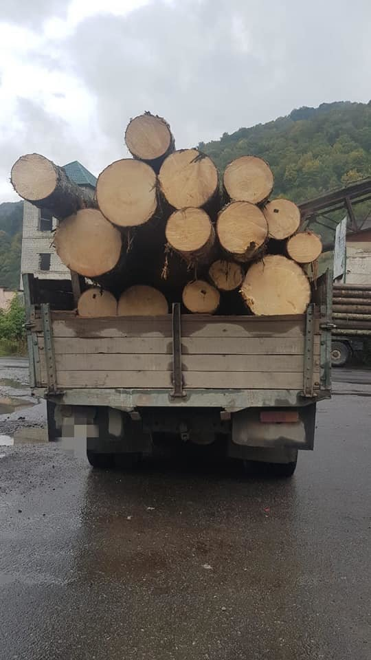 4 випадки за один день: на Закарпатті поліція активно бореться з чорними лісорубами (ФОТО), фото-6