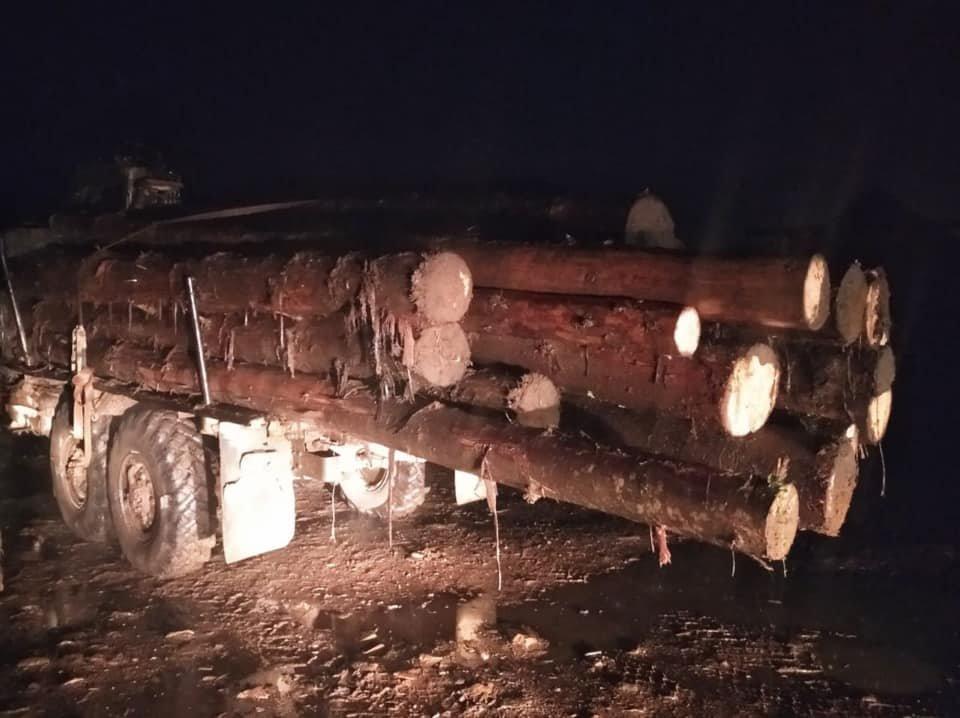 4 випадки за один день: на Закарпатті поліція активно бореться з чорними лісорубами (ФОТО), фото-1