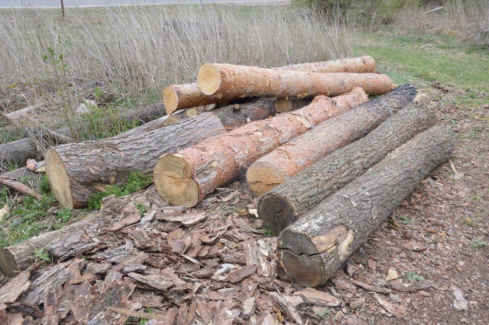 Поліція виявила незаконну деревину, фото-1