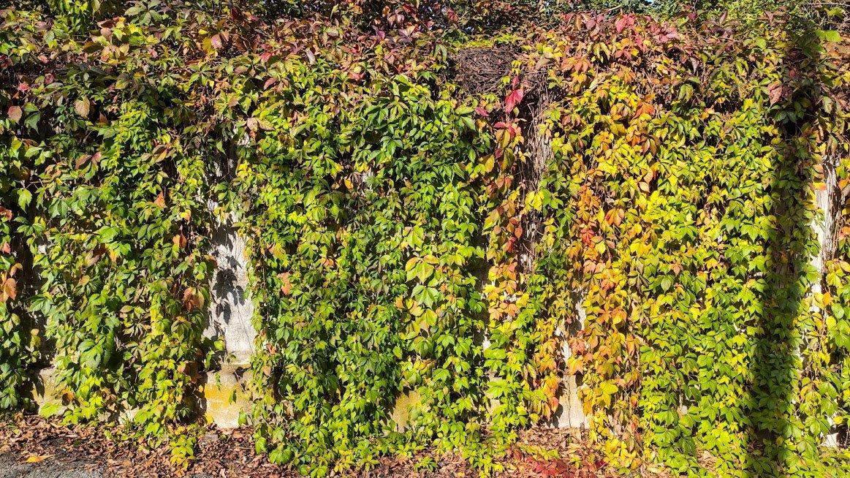 Золота осінь в Ужгороді: не проґавте красу! (ФОТОРЕПОРТАЖ), фото-2