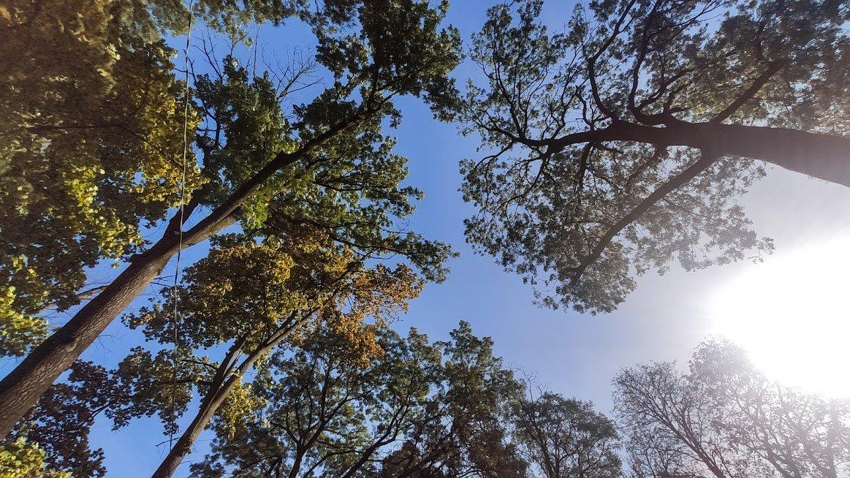 Золота осінь в Ужгороді: не проґавте красу! (ФОТОРЕПОРТАЖ), фото-4