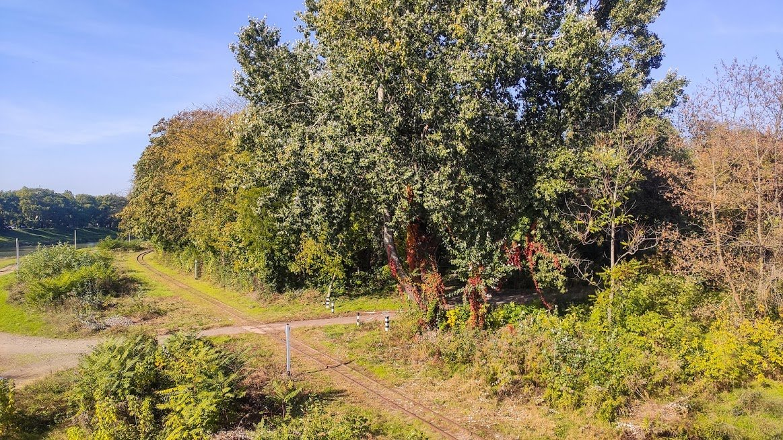 Золота осінь в Ужгороді: не проґавте красу! (ФОТОРЕПОРТАЖ), фото-3