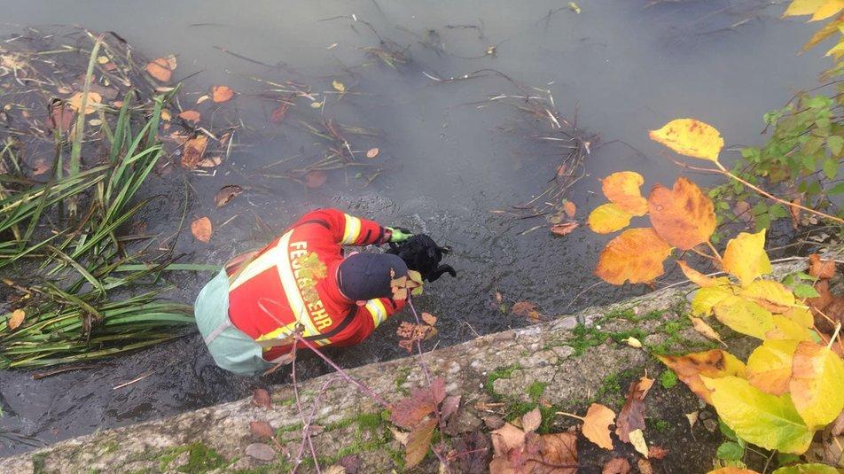 Історія порятунку: на Закарпатті врятували цуценя, яке не могло дістатись берегу (ФОТО), фото-2