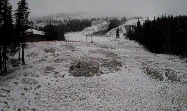 Білі мухи налетіли: у Карпатах випав сніг (ФОТО), фото-1