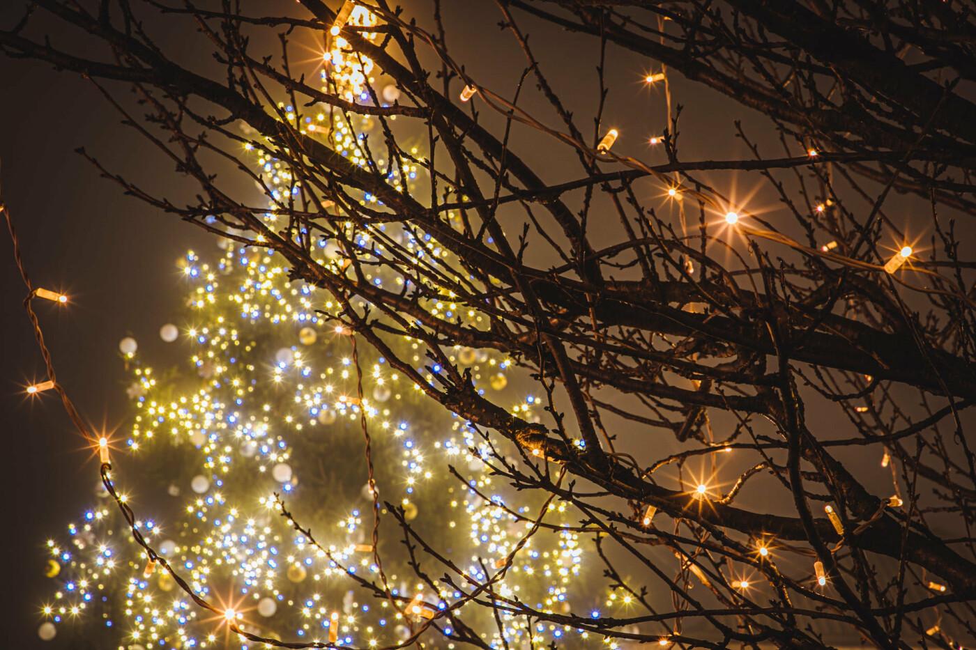 Оповитий туманом: в мережі показали світлини вечірнього Ужгорода (ФОТО), фото-2
