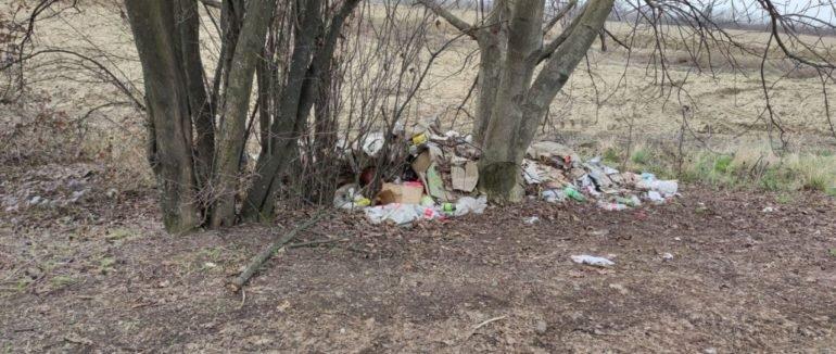 Муніципали Мукачева оштрафувала чоловіка за викид сміття на зеленій зоні (ФОТОФАКТ), фото-1