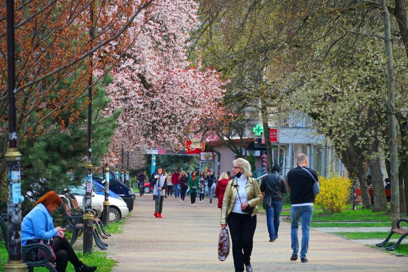 Фото дня: неймовірні світлини Ужгорода у весняній красі, фото-10