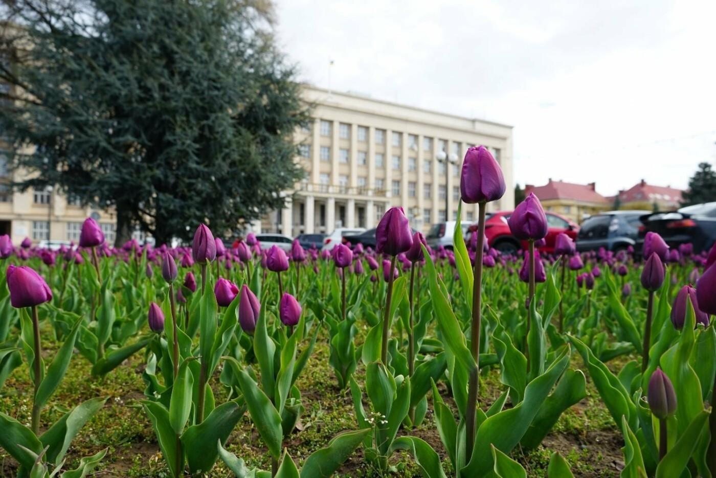 Фото дня: неймовірні світлини Ужгорода у весняній красі, фото-11
