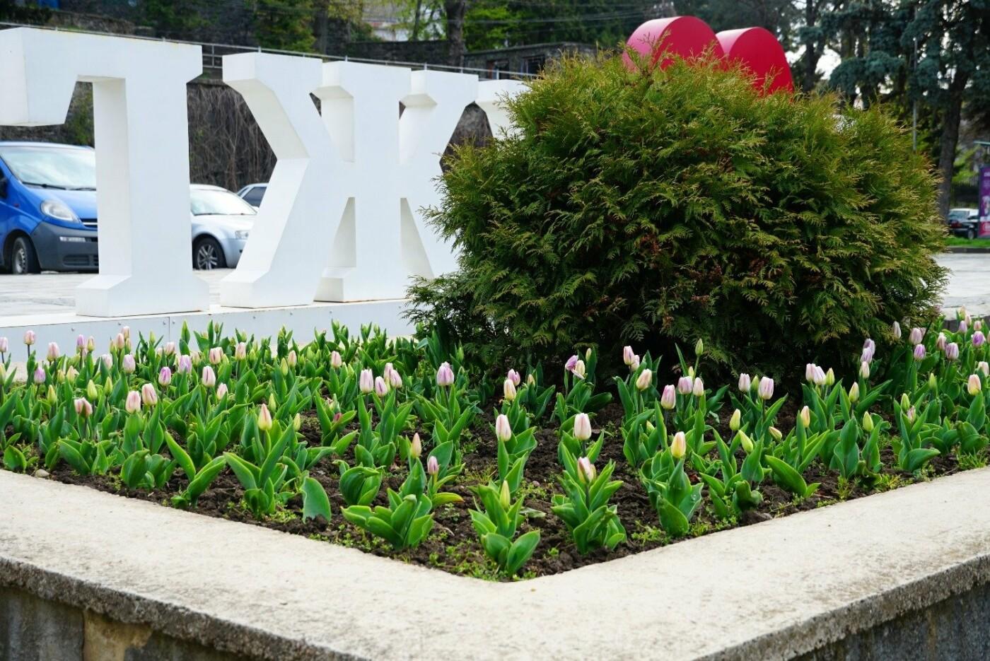 Фото дня: неймовірні світлини Ужгорода у весняній красі, фото-12