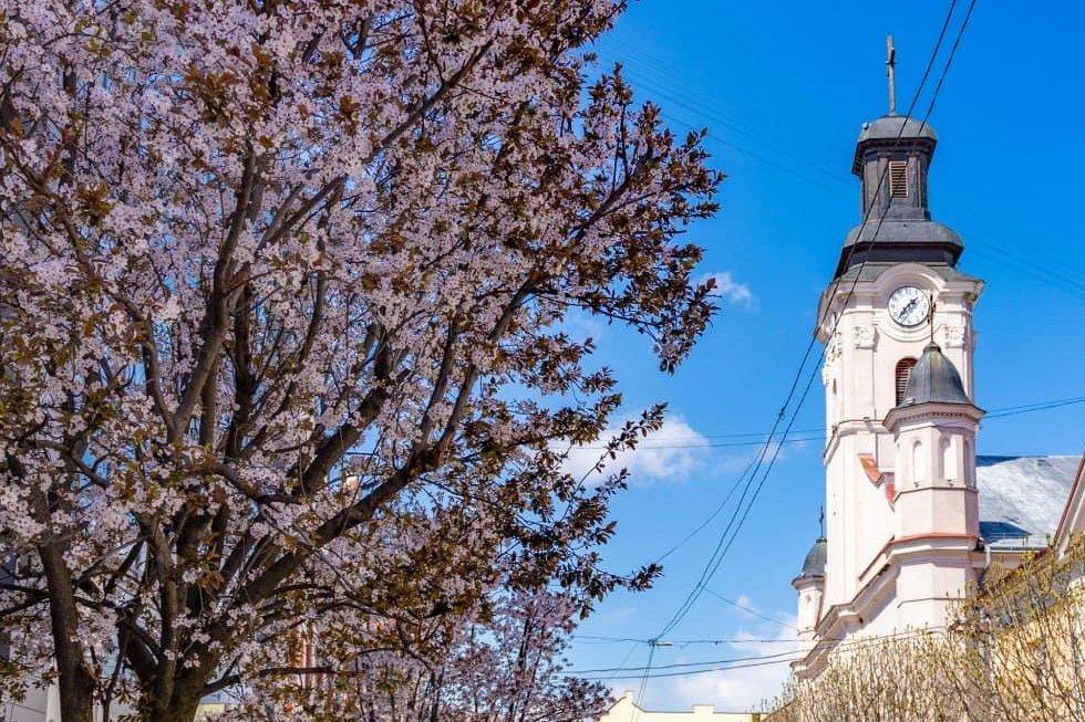 Фото дня: неймовірні світлини Ужгорода у весняній красі, фото-1