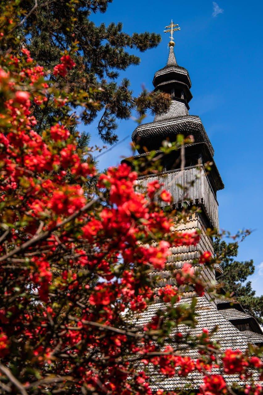Фото дня: неймовірні світлини Ужгорода у весняній красі, фото-2