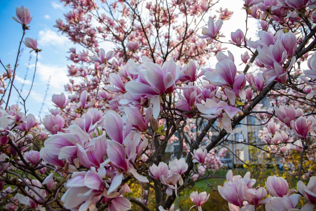 Фото дня: неймовірні світлини Ужгорода у весняній красі, фото-6